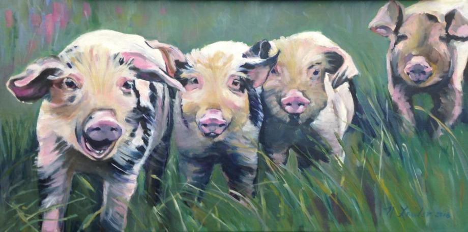 Irish pigs